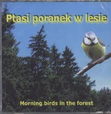 Ptasi poranek w lesie